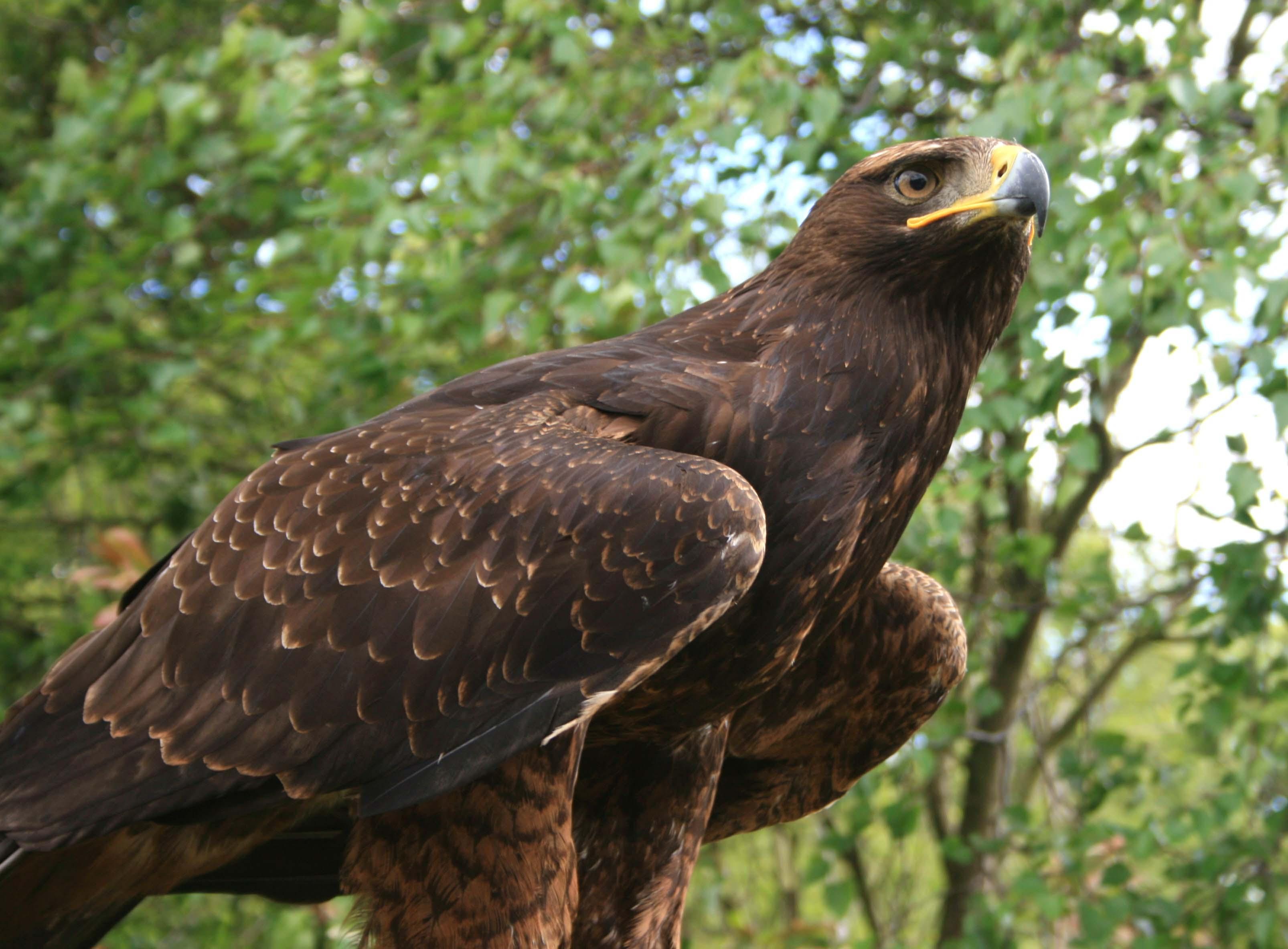 Rhuallan Raptors 018